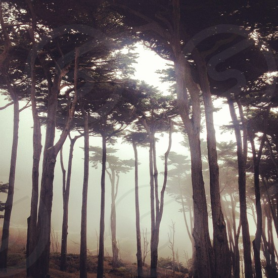 sunlight through trees with fogs view photo