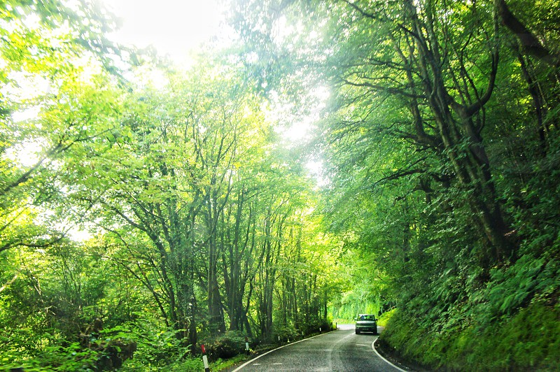 car driving on a winding road through green lush trees photo
