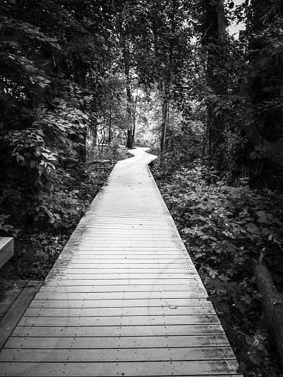 pathway through forest photography photo