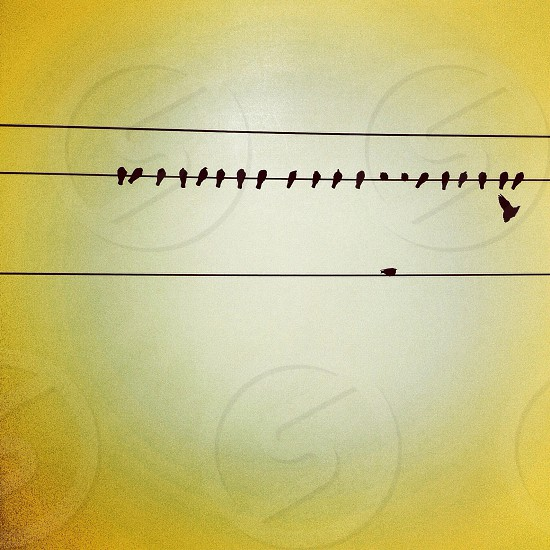 birds on an electrical wire photo