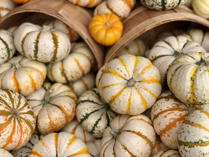 Autumnal Vibes Request Fall And Autumn Pumpkins For Holiday Decor And Celebrations In Baskets Fall Autumn Autumnal Striped Pumpkins Holiday Decor Fall Decor Unique By Jean Morgan Photo Stock Snapwire