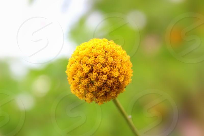 Flower ball photo