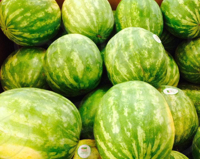 green and beige watermelon photo