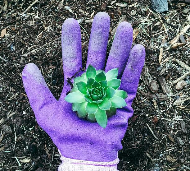 P.O.V of a hand planting a plant. photo