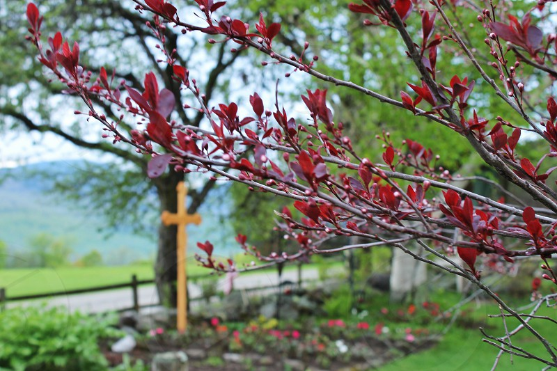 red leaves on tree with cross in the background photo