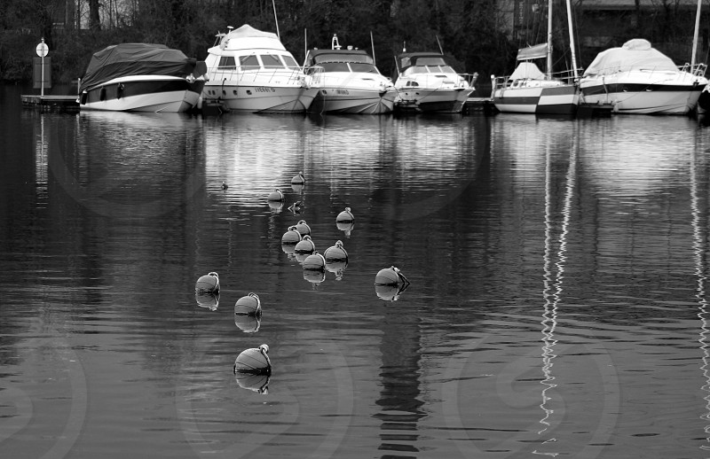 ducks on body of water near yachts photo