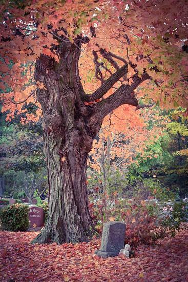 Graveyard in Massachusetts autumn trees fall foliage photo