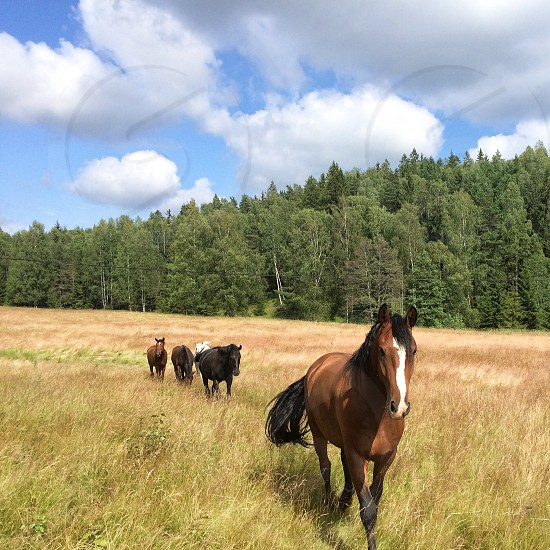 brown white and black horse standing on green weeds photo