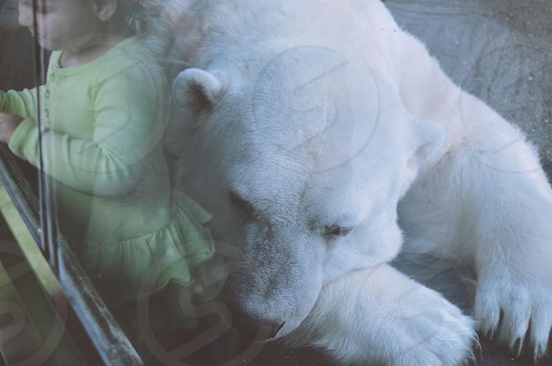 polar bear near child photo