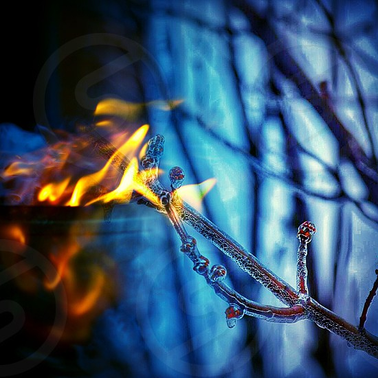 shallow photography of fire photo