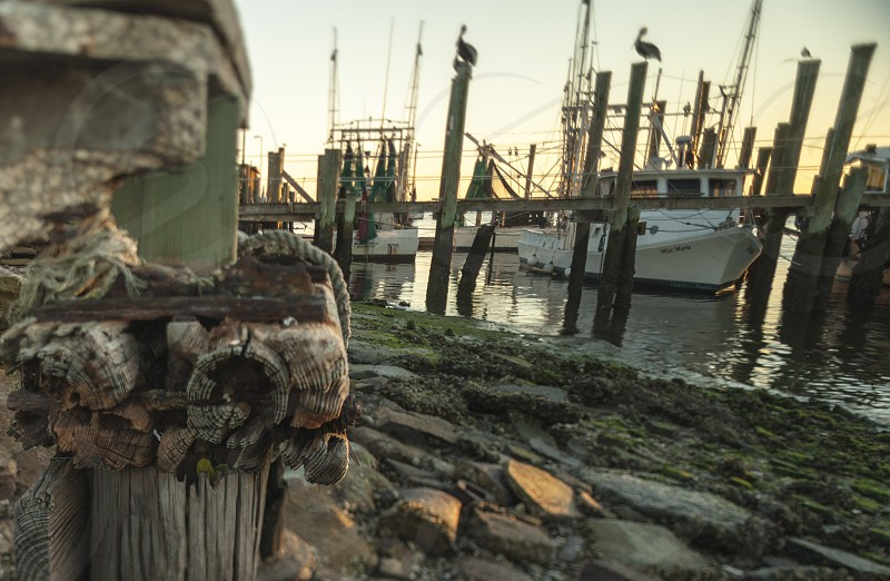 Boat Dock photo