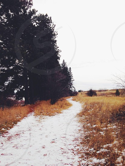 green trees near pathway photo