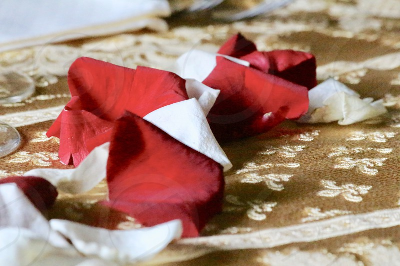 Rose petals on table dinner decoration photo