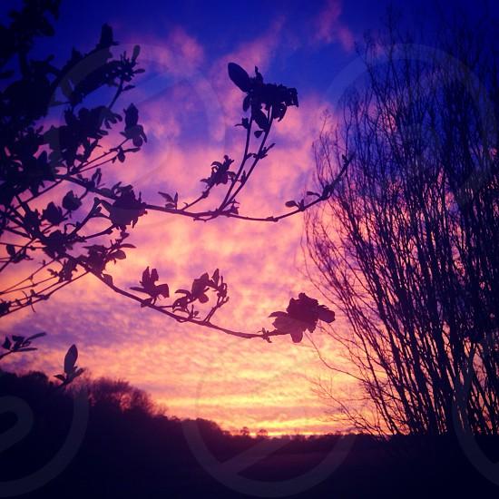 Sunset in backyard photo