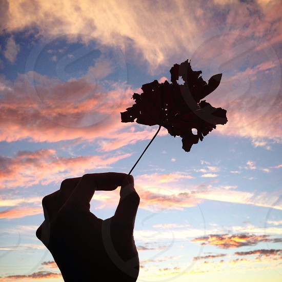 silhouette of hand holding leaf photo