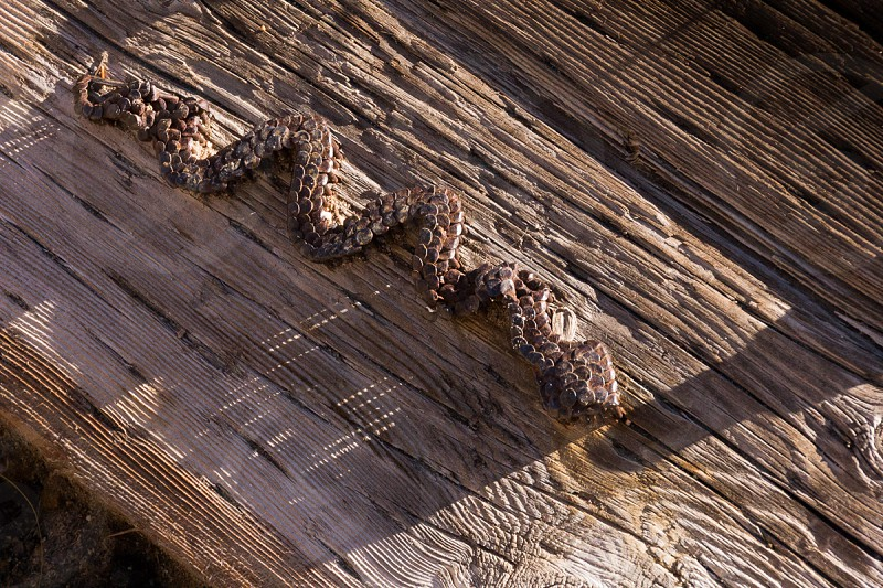 wood wood grain log snake nails southwest united states  photo