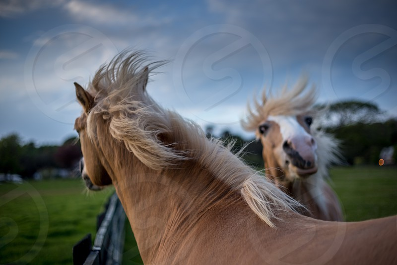 brown and white horses on ranch photo