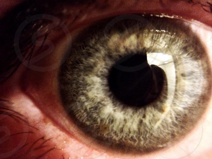 human brown eyeball photo