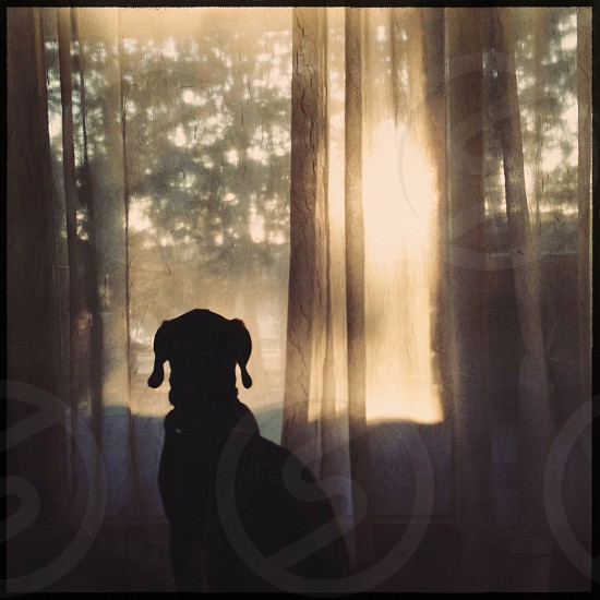 dog silhouette view  photo