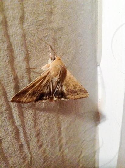 Moth close-up photo