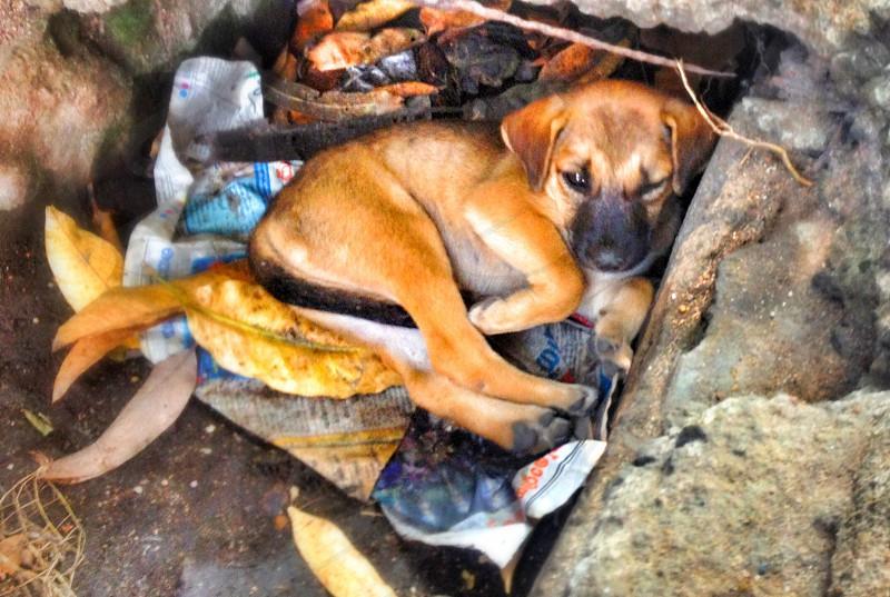 Street puppy dog India photo