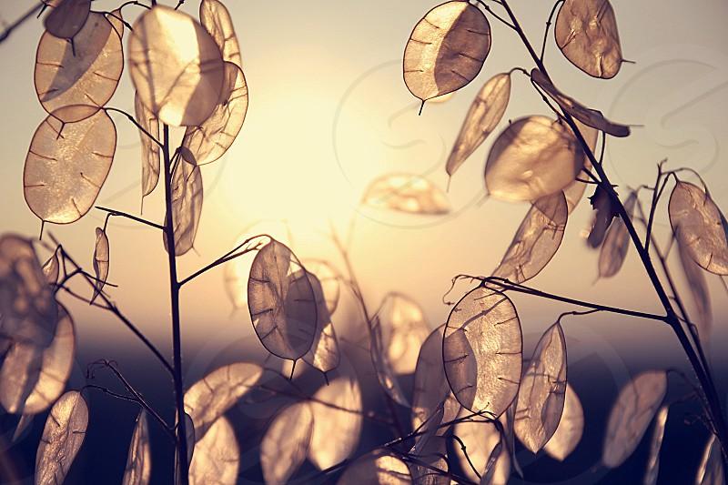 Inspiring leaves sunset bright light golden photo