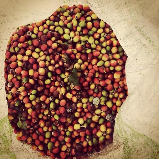 Raw coffee beans Mexico  photo