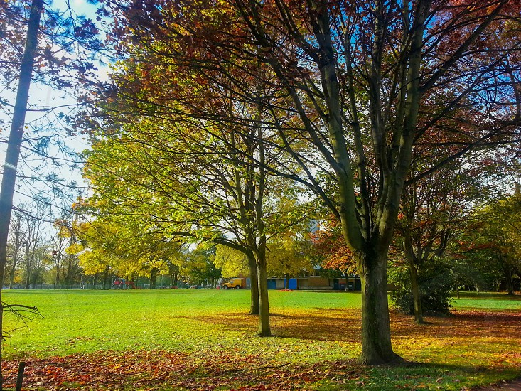 maple trees on grass field photo