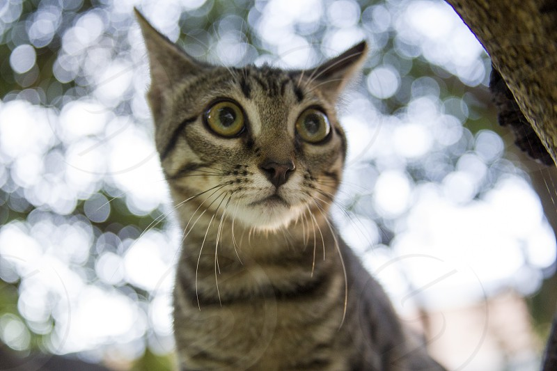 Playful striped kitten hunts on nature. photo