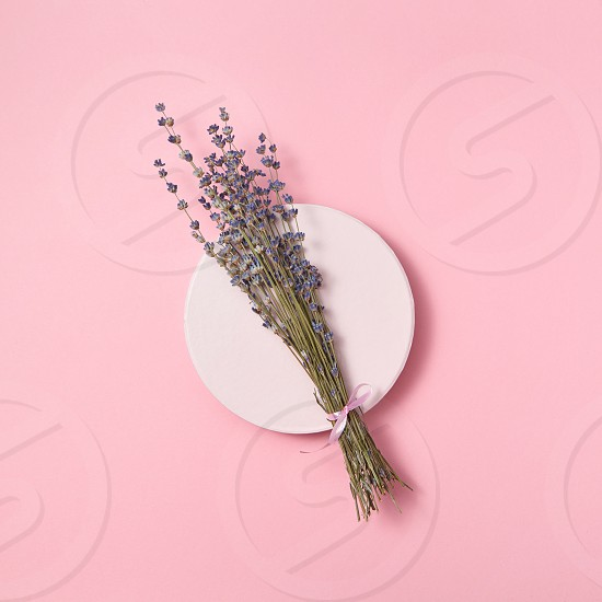 Twig of natural lavender on a round ceramic board on a pastel pink background with copy space. Holiday greeting card. Top view. photo