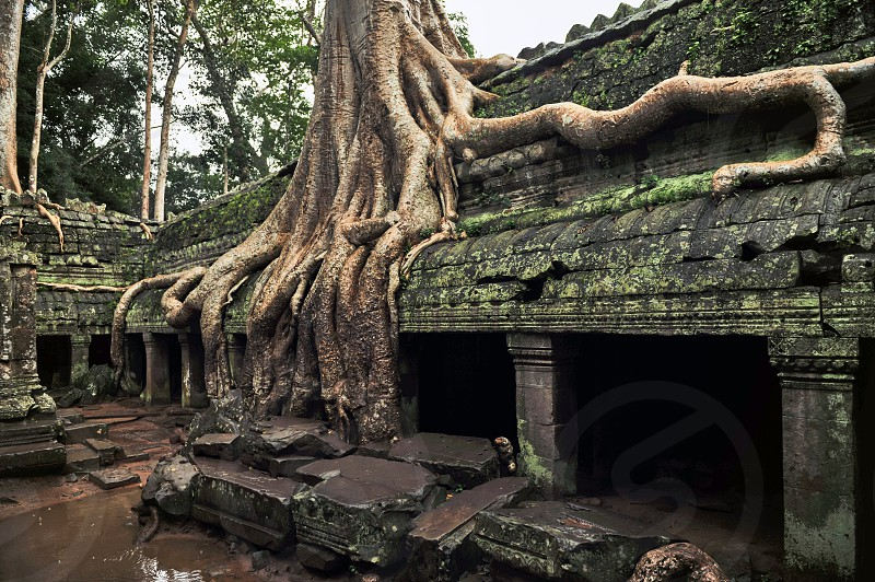 Ta Prohm the Khmer temple at Angkor in Siem Reap Province Cambodia built in the Bayon style largely in the late 12th and early 13th centuries photo