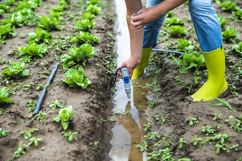 Woman mesures irrigation water with digital PH meter in watering canal. Lettuce plants. photo
