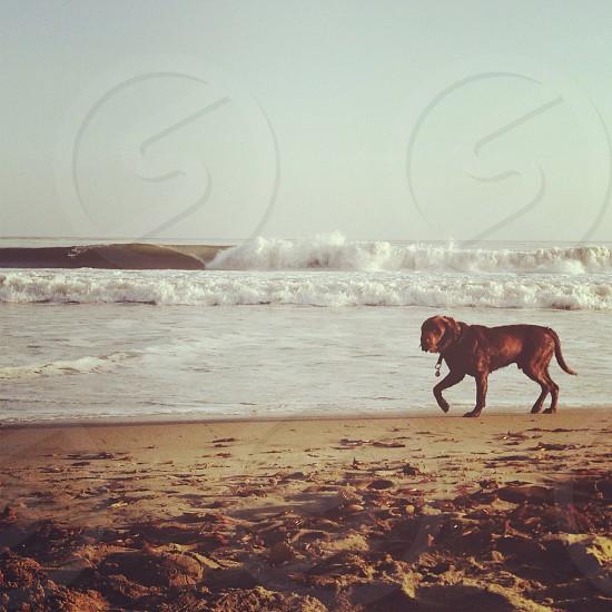 I love my dog.. photo