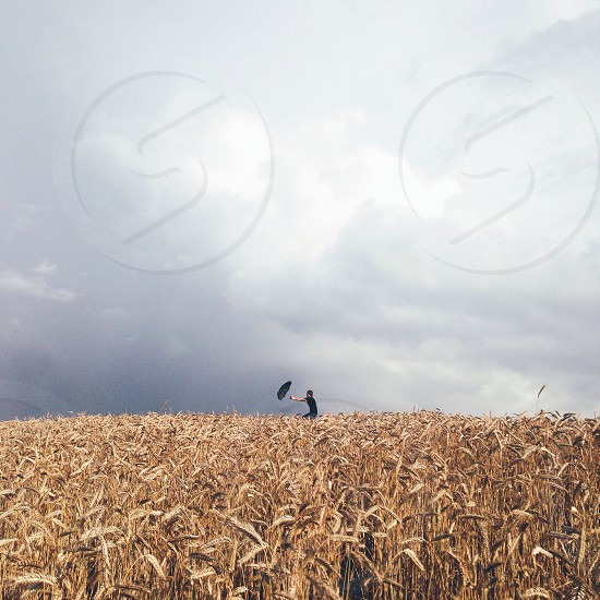 person holding black umbrella across brown wheat field under white cumulus clouds photo