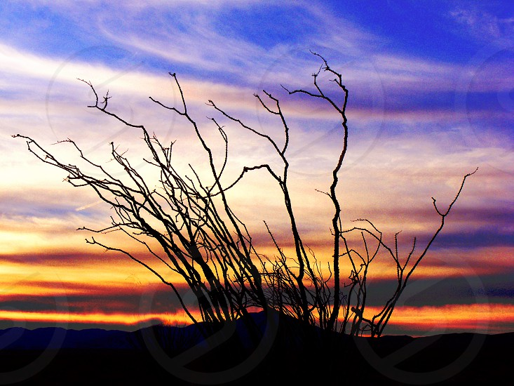 A desert plant is silhouetted against a red and orange sky of a sunset photo
