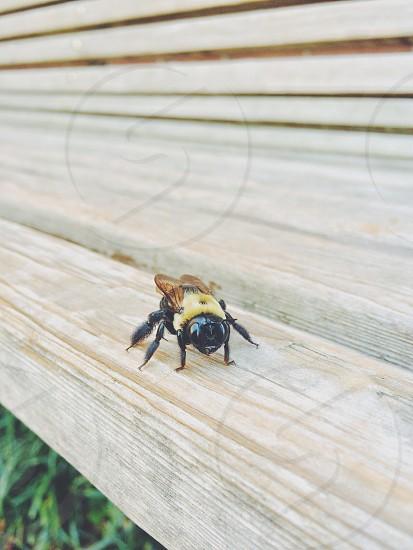 buzz buzz photo