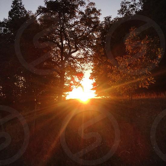 sun shining through trees photo