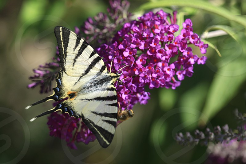 butterfly sitting on flower photo