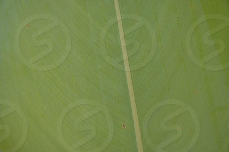Close up of leaf photo