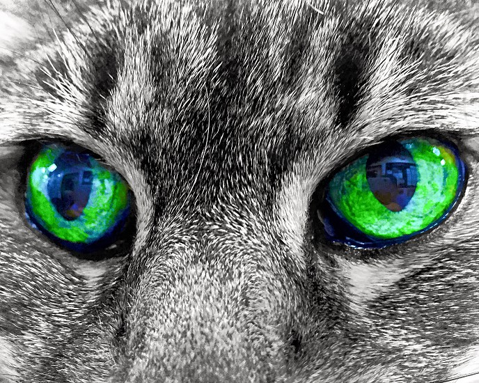 gray cat with green eye photo