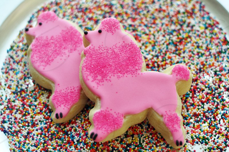 hot pink poodle cookies on colorful rainbow sprinkles photo