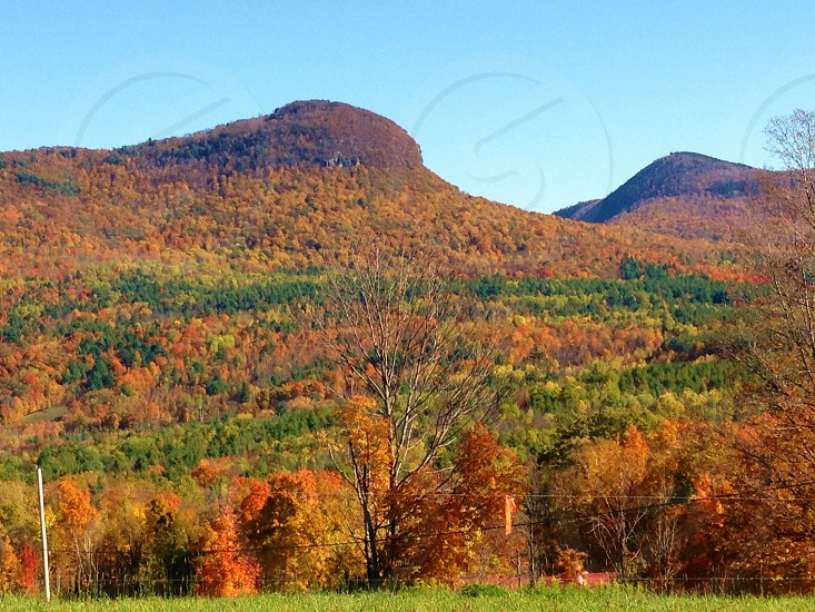 hills with brown and green trees photo