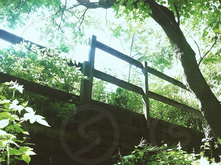 grey wooden bridge on forest  photo
