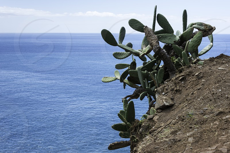 rocks with big green cactus and bleu atlantic ocean on madeira island photo