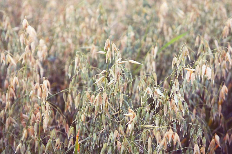 #farms #grain photo