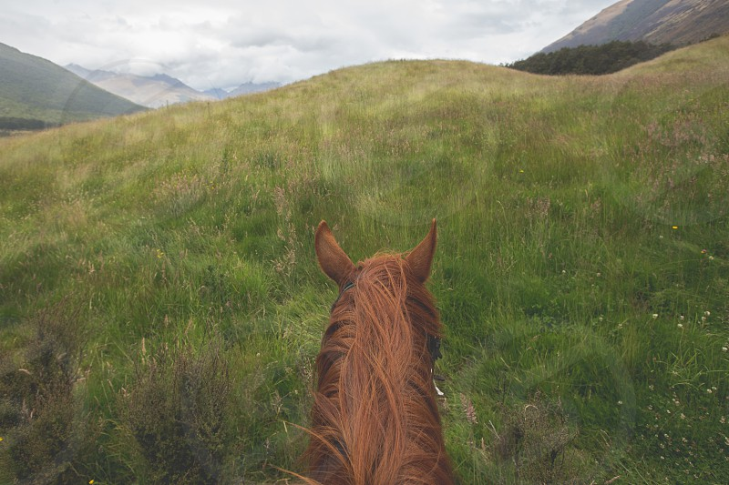 Horseback riding through the scenic hills of the South Island of New Zealand. photo