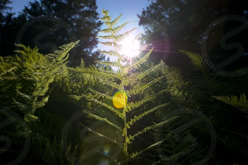 Photosynthesis photo