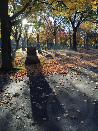 Steamy shadowy graveyard photo