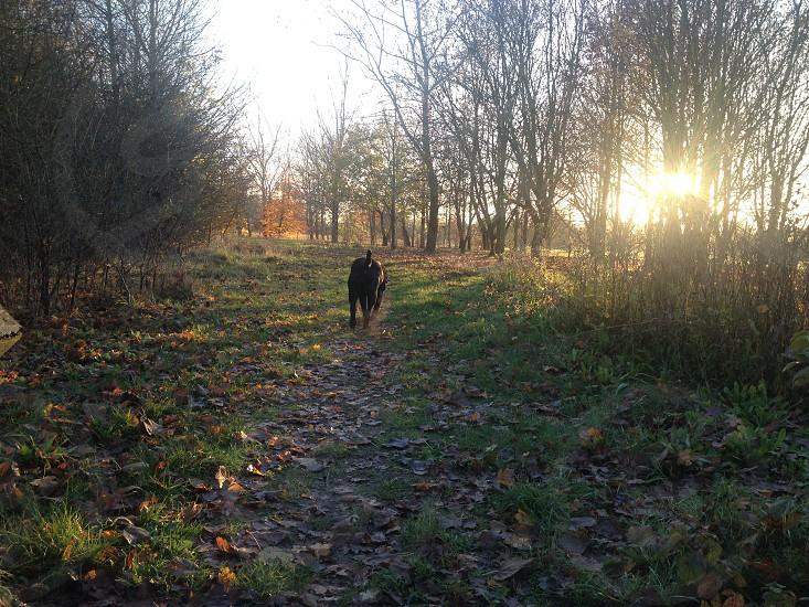 Autumn Walk photo