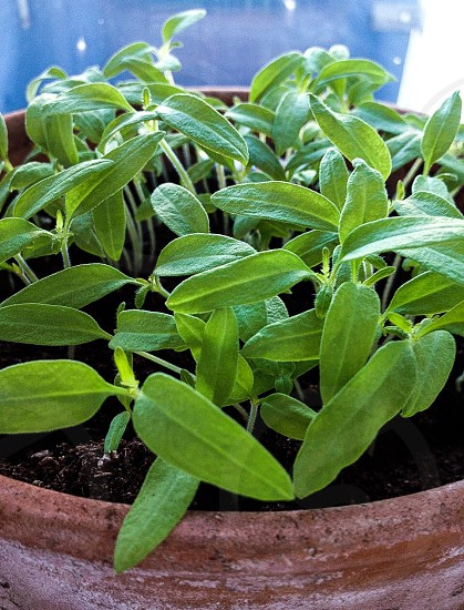 green leaved plants in brown clay pot photo